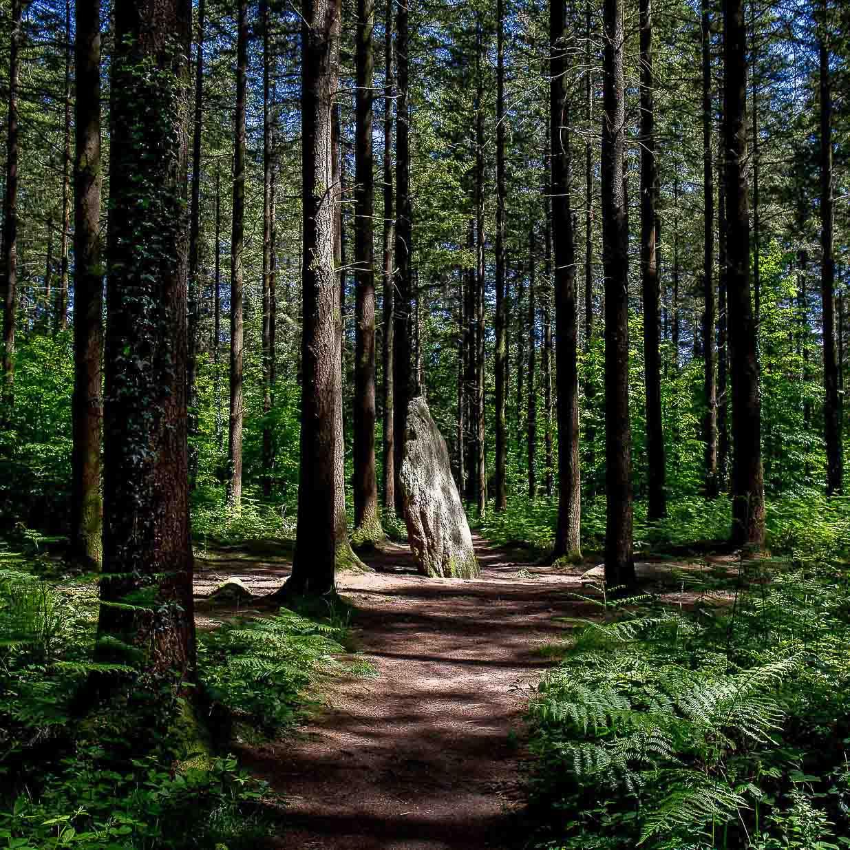 menhirs-etoile-camors-landes-de-lavaux-megalithes